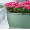 саксия-за-балкон